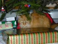 Thumbnail of MATINICUS under the tree